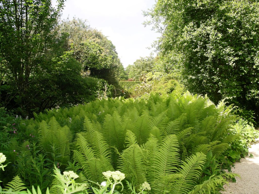 Landscaping With Ferns : Forever fronds my review of fern fever for compass