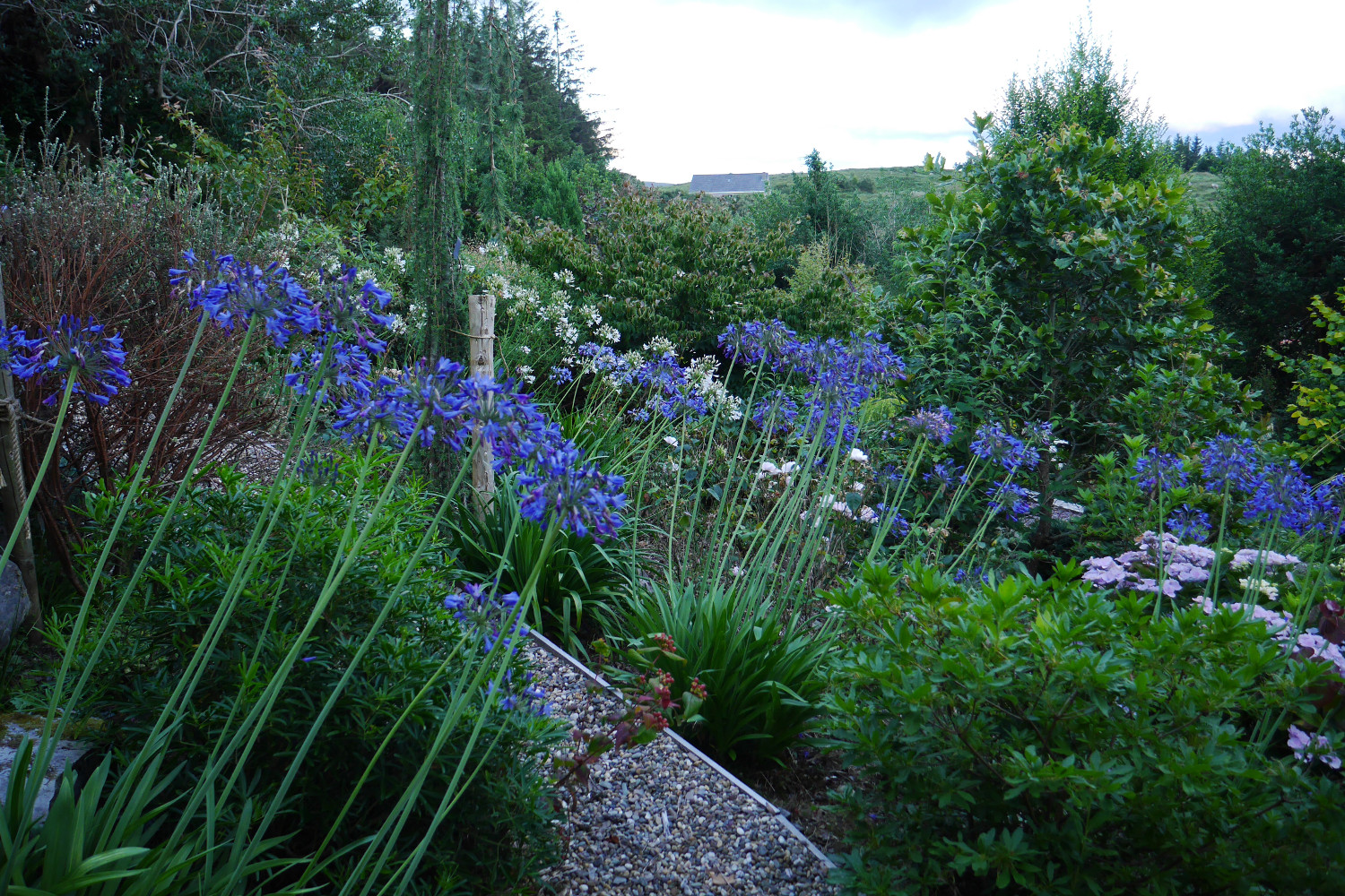 tim austen garden design austen family garden kerry - Garden Design Kerry