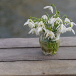 Snowdrops, bulbs, planting, gardens, irish, design