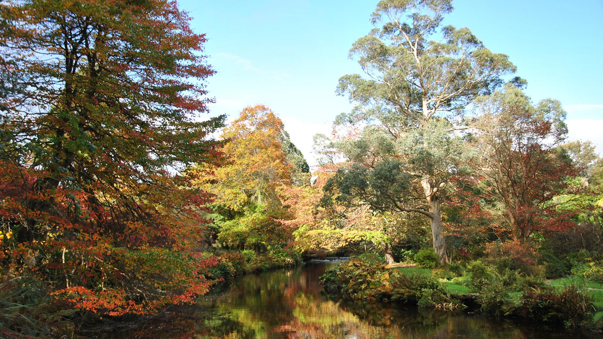 My Blog – Tim Austen Garden Designs